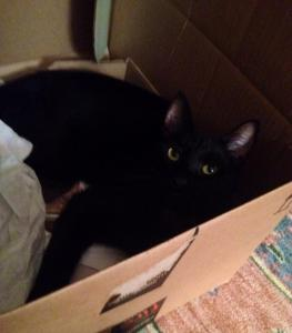bogey in a box